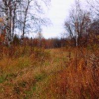 Уж небо осенью дышало.... :: Cветёлка ***