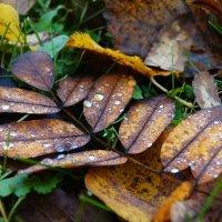 Осень пришла... :: Andy Bayt