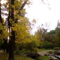 Осень в Александровском саду. (Санкт-Петербург) :: Светлана Калмыкова
