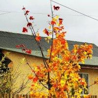 Осенний день-3 :: Фотогруппа Весна.
