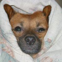 Под теплый одеялом :: Любовь Потравных