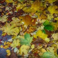 Осеннее разноцветье. :: Лара ***