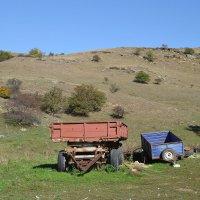 На ферме :: Сергей