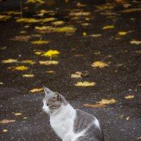 Осенью :: Elena Ignatova