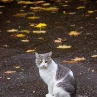 Кошки нашего двора :: Elena Ignatova