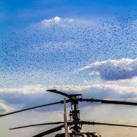 Птицы :: Алёна Маненкова