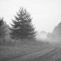 Туман :: Ольга Лапшина