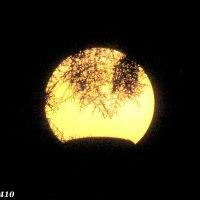 Вечерний фонарь :: Нина Бутко