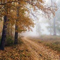 Осенний туман :: Любовь Потеряхина