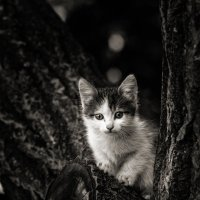 Котёнок :: Вадим
