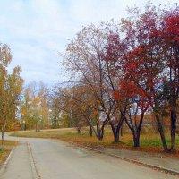 Стоял октябрь уж во дворе. :: Мила Бовкун
