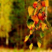 это осень... :: Александр Прокудин