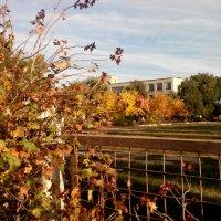 Осенние краски :: Татьяна Королева