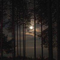 Лунная Ночь :: Софья