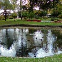 Осенний пруд в Александровском саду. (Санкт-Петербург). :: Светлана Калмыкова