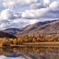 Рыжее золото осени... :: Галина Шепелева