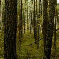 Осень :: Яков Реймер