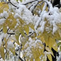 Припорошил снежок листья ясеня :: Domna Kuznechic