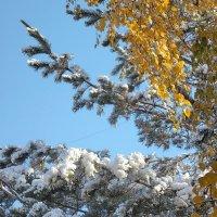 Недолго продержится первый снег :: Domna Kuznechic