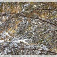 Любит сюрпризы зима :: Domna Kuznechic