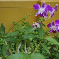 Орхидеи :: Наташа Федорова