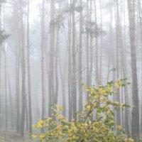 туман :: Галина Фуникова