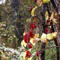 Осень :: ArtNoirQ