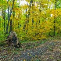 Осень пришла в лес :: Юрий Стародубцев