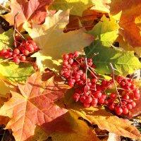 Осенний блюз :: Ольга