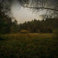 Поляна в лесу :: Алексей Строганов