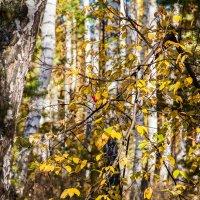 Желтый лист осенний :: Евгений Мельников