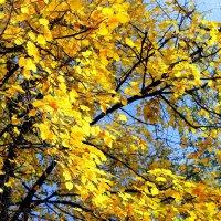 И вновь чудо-осень плывет в вышине, янтарные слёзы роняя . :: Валентина ツ ღ✿ღ