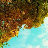 Осень :: Александра Кускова