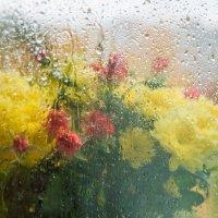 А дождь стучит в моё окно... :: Светлана