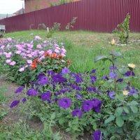 августовский сад :: Tatyana Kuchina