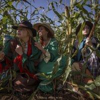 В Зарослях Кукурузы :: Алексадр Мякшин