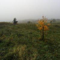 краски осени :: Юрий Кальченко