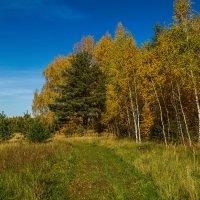 Что такое осень это ..... :: Андрей Дворников