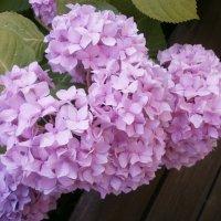 В саду летом ... :: Алёна Савина
