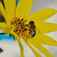 Рудбекия и пчёлка :: Маргарита Орловская