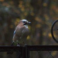 Лесная птица :: Aнна Зарубина