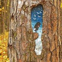 Красота в осеннем лесу :: Александр Запылёнов