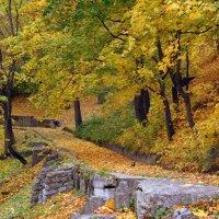 Сыпет осень желтою листвою... :: ирина
