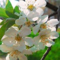 Весна :: Victoria