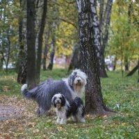 моя парочка в осеннем лесу :: Лариса Батурова
