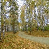 Золотая осень. :: Мила Бовкун