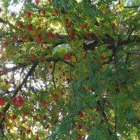 Осень :: &Любовь& &~&