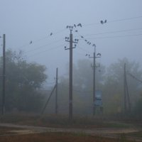 Утро, туман и вороны :: Арсений Корицкий