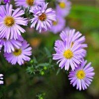 Цветы. :: владимир