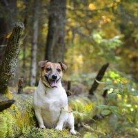 прогулка в лесу :: Asya Piskunova